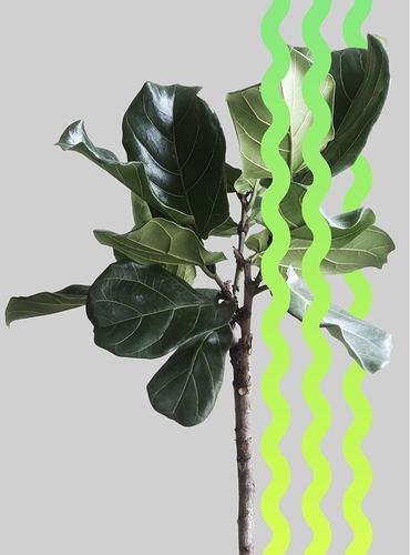 Dark Green Palette for Lime Green